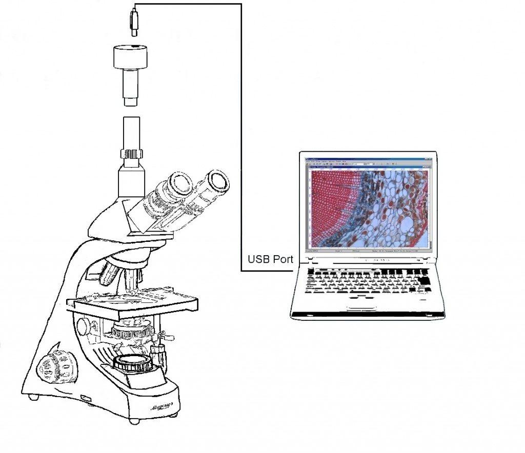 микроскоп тринокулярный фото